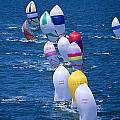 Colorful Sails In Ocean Poster by Sharon Green - Printscapes