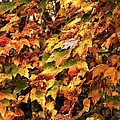 Colors of Autumn Poster by John Rizzuto