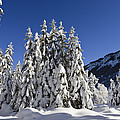 Coniferous Forest In Winter Poster by Konrad Wothe