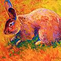 Cottontail I Poster by Marion Rose
