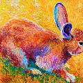 Cottontail II Poster by Marion Rose