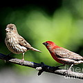 Courtship In Nature . 40D8073 Poster by Wingsdomain Art and Photography