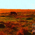 Cow Grazing In The Hills Poster by Wingsdomain Art and Photography