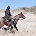Cowboy on Horseback Print by Cindy Singleton
