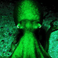 Creatures of The Deep - The Octopus - v4 - Green by Wingsdomain Art and Photography
