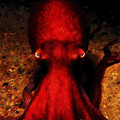 Creatures of The Deep - The Octopus - v4 - Red Print by Wingsdomain Art and Photography