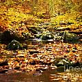 Creek In The Woods Print by Kathy Jennings