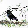 Crow On Branch Poster by Carolyn Doe