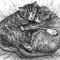 Cuddly Cats - Black and White Art Print Poster by Kelli Swan