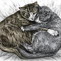 Cuddly Cats - Color Tinted Art Print Poster by Kelli Swan