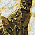 Curious Cats Poster by David G Paul