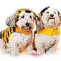Cute dogs in Halloween costumes Print by Elena Elisseeva