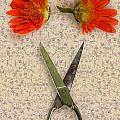cutting flowers Poster by Joana Kruse