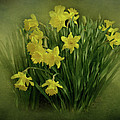 Daffodils Poster by Sandy Keeton