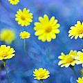 Daisies on Blue Poster by Al Hurley