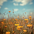 Daisy Meadow Poster by Boston Thek Imagery