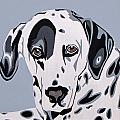 Dalmatian Poster by Slade Roberts