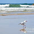 Dancing on the Beach Print by Kaye Menner
