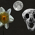 Death And The Daffodil  Poster by Eric Kempson