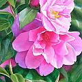 Deep Pink Camellias Print by Sharon Freeman
