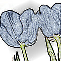 Denim Tulips Print by Cheryl Young