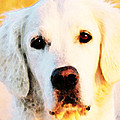 Dog Art - Golden Moments Print by Sharon Cummings