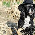 Dog with a hat Poster by Mats Silvan
