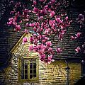 Dogwood by the Window Print by Joyce Kimble Smith