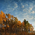 dressed in autumn colors Poster by Priska Wettstein