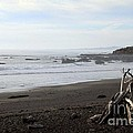 Driftwood and Moonstone Beach Poster by Linda Woods