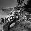 Driftwood on Beach Poster by Steven Ainsworth