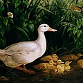Duck and ducklings Print by English School