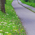 Dutch Bicycle Path - Digital Painting Poster by Carol Groenen