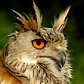 Eagle Owl Poster by Photodream Art