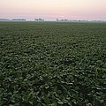 Early Morning Mist Over Soybean Fields Poster by Brian Gordon Green