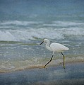 Egret Print by Sandy Keeton