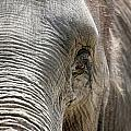 Elephant Eye Poster by Jeannie Burleson