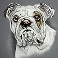 English Bulldog Poster by Patricia Ivy