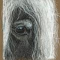 Equine Eye Detail Print by Terry Kirkland Cook