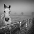 Equine Fog Poster by Taken with passion