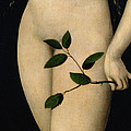 Eve Print by The Elder Lucas Cranach