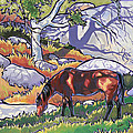 Evening in Deer Canyon Poster by Nadi Spencer