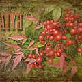 FAITH Spring Berries Print by Cindy Wright