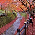 Fall Colors Along Bending River In Kyoto Print by Jake Jung
