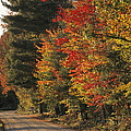 Fall Colors Line A New England Road Print by Heather Perry