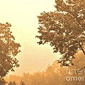 Fall Foggy Morning Poster by Marsha Heiken