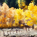 Fall in the Sierra Print by Carol Leigh