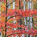 Fall Layers Print by Adam Pender