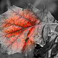 Fall Leaf Print by RICK RAUZI