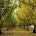 Fall Orchard Poster by Kathy Yates